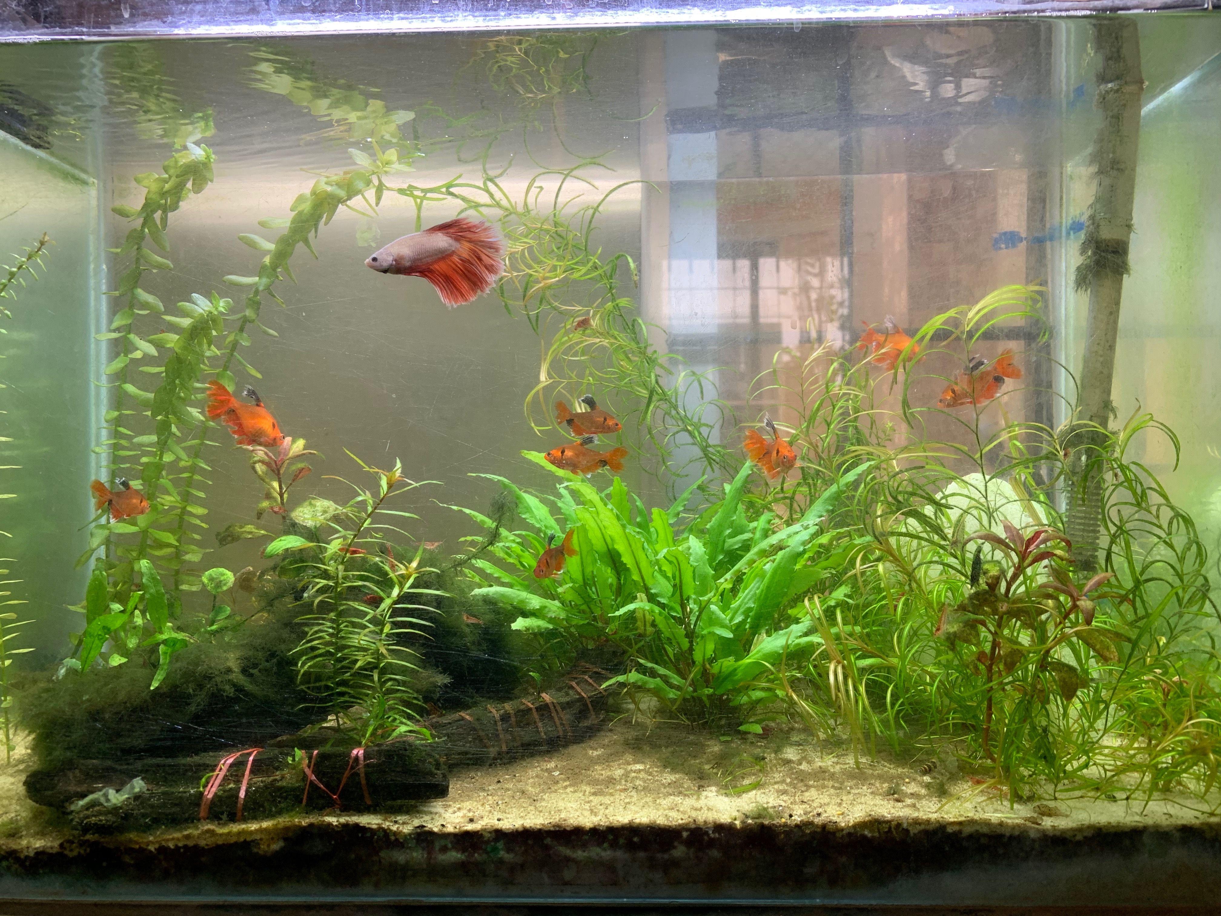 My Planted Aquarium With Tropicana White Sand Planted Aquarium Aquarium Aquascape