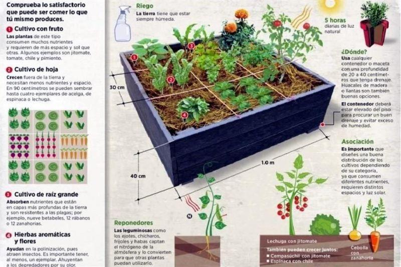 Crea tu propia huerta cultivo huerto huerto casero y - Crea tu propia casa ...