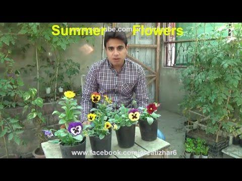 Summer Season Flowers List Popular Summer Flowers Flower For Beauty Urdu Hindi Youtube In 2020 Flowers Name List Flowers Name In Hindi Summer Flowers
