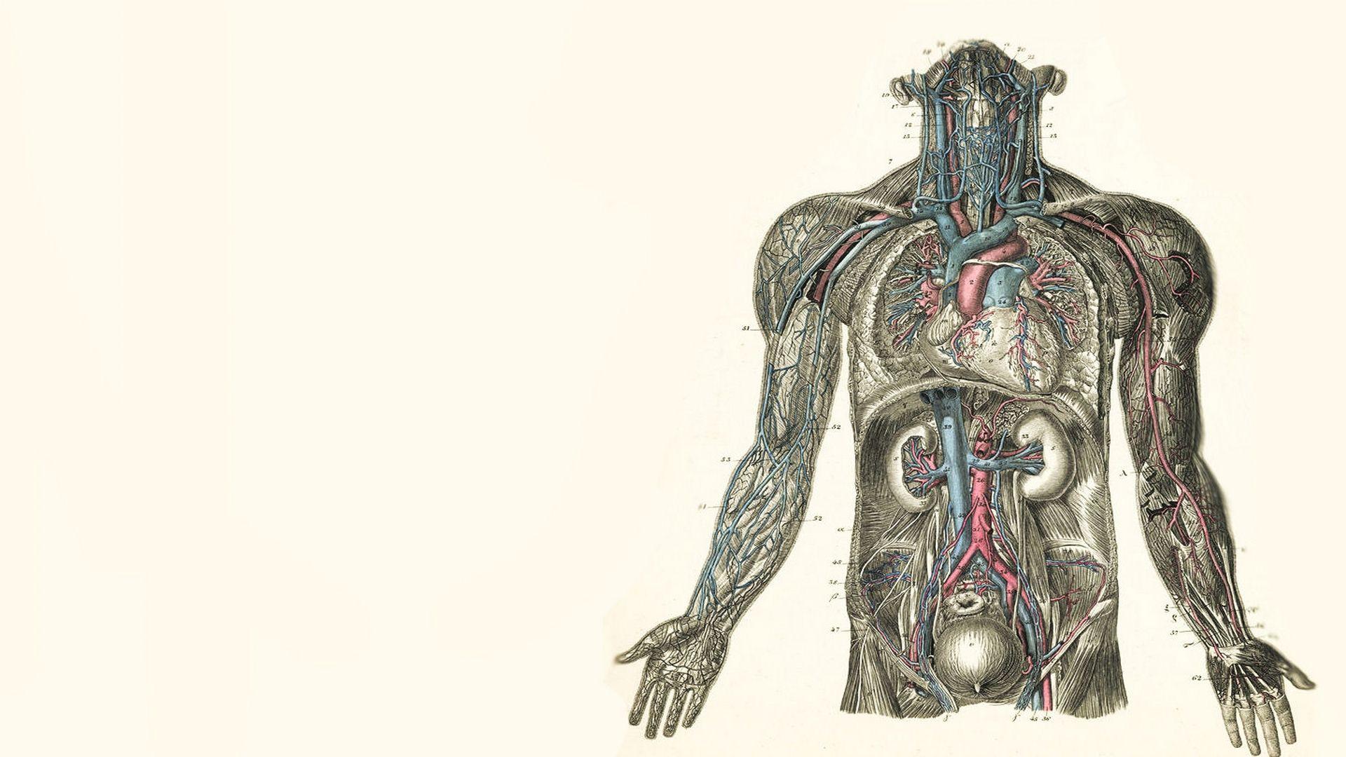 Anatomy Wallpapers Biyoloji