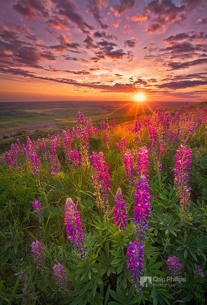spring in washington state | ... of Steptoe Butte during spring.Palouse Hills, eastern Washington State