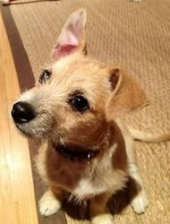 Adopt Poppy On Terrier Dogs Dogs Animals