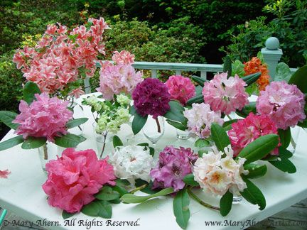 phoro: rhododendron blooms ... flower show competition ... inspiration for Best Thoughts by Stampin' Up!