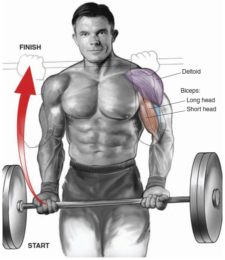 how to add muscle mass to arms