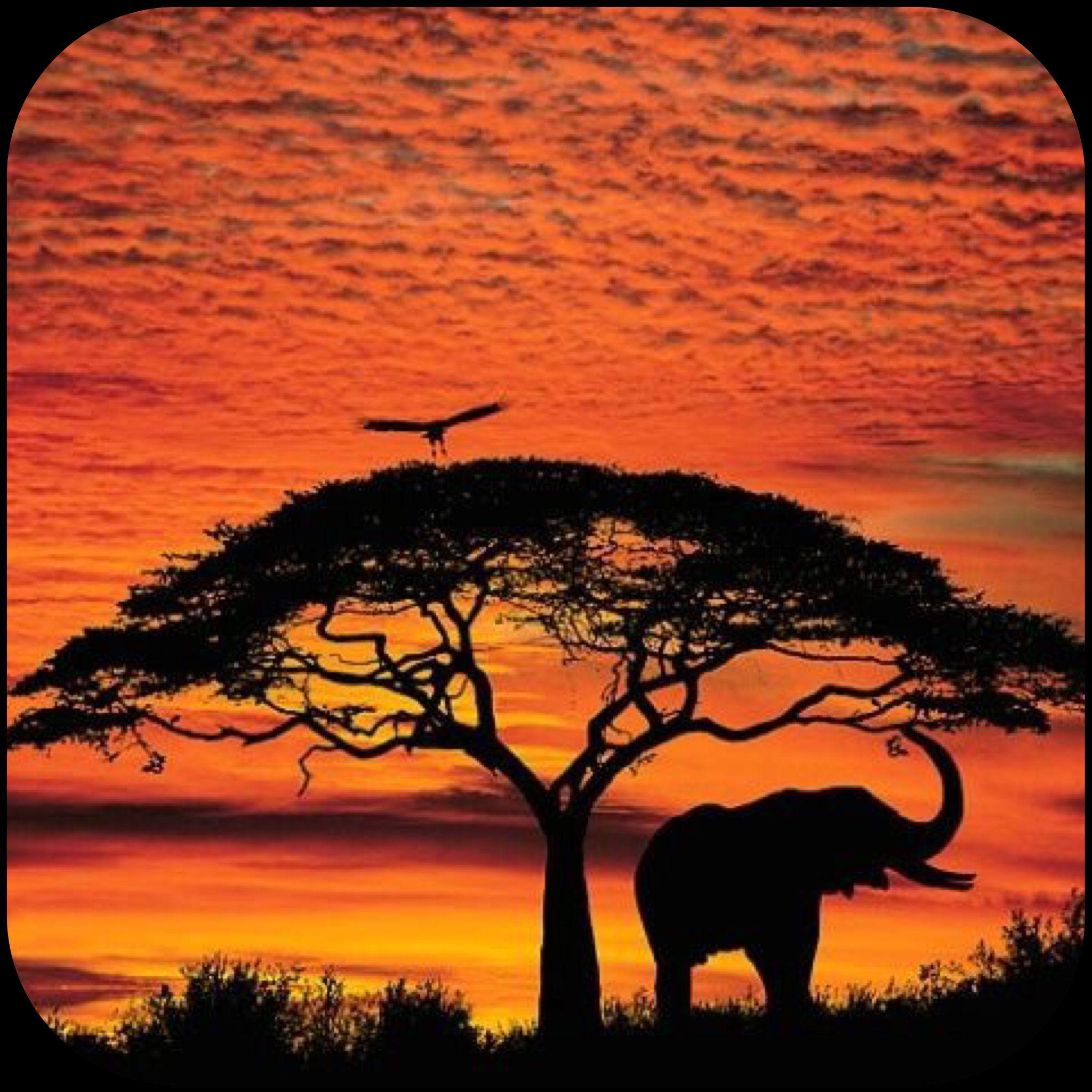 Baobab tree at africa madagascar and australia