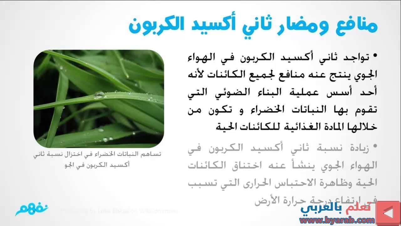 ثاني أكسيد الكربون علوم للصف السادس الإبتدائي نفهم Green Beans Vegetables Celery