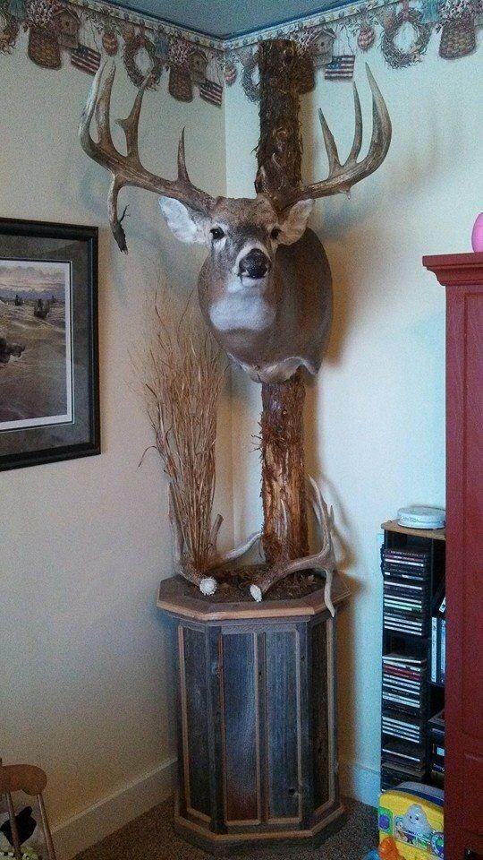 Whitetail whitetail mounts pinterest decoraci n for Trofeos caza decoracion