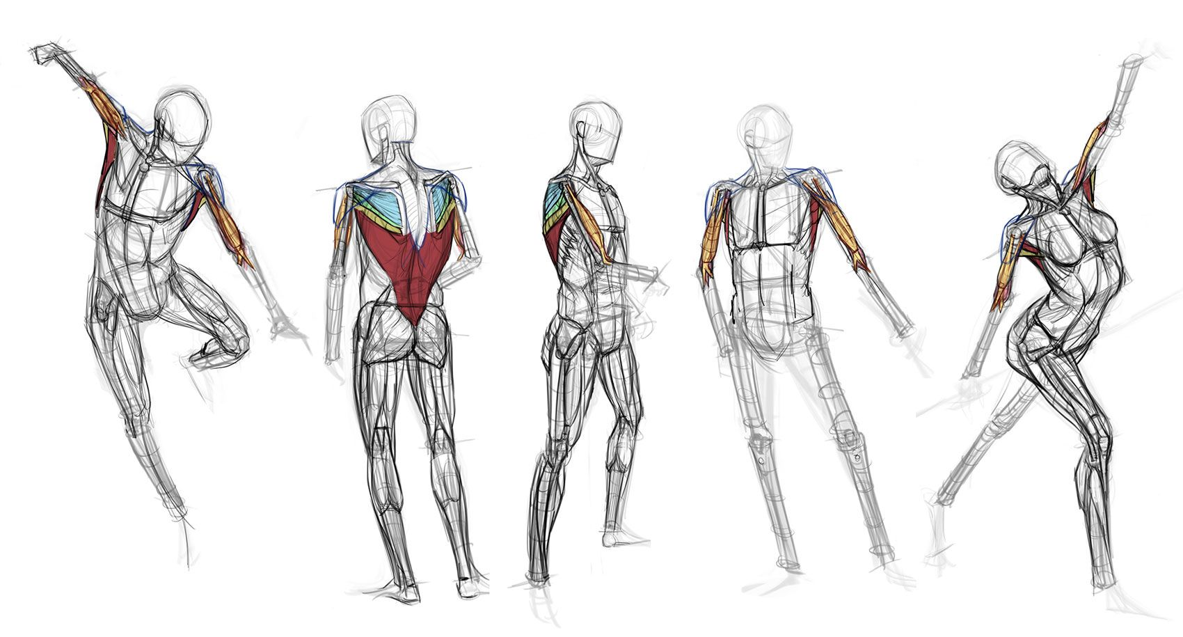 analytical figure drawing — Anatomy drawing references for artists ...