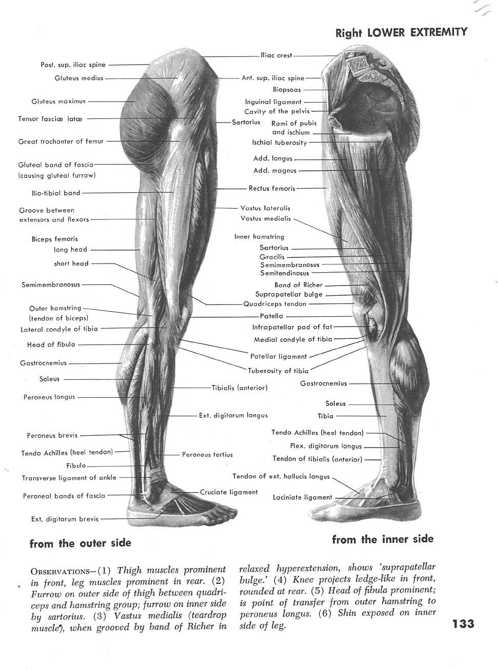 Right Leg Profile Muscles Both Sides Anatomy Pinterest Anatomy