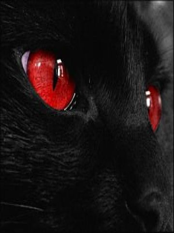 Red Cat Red Eye Cat Wallpaper Iphone Blackberry Love It