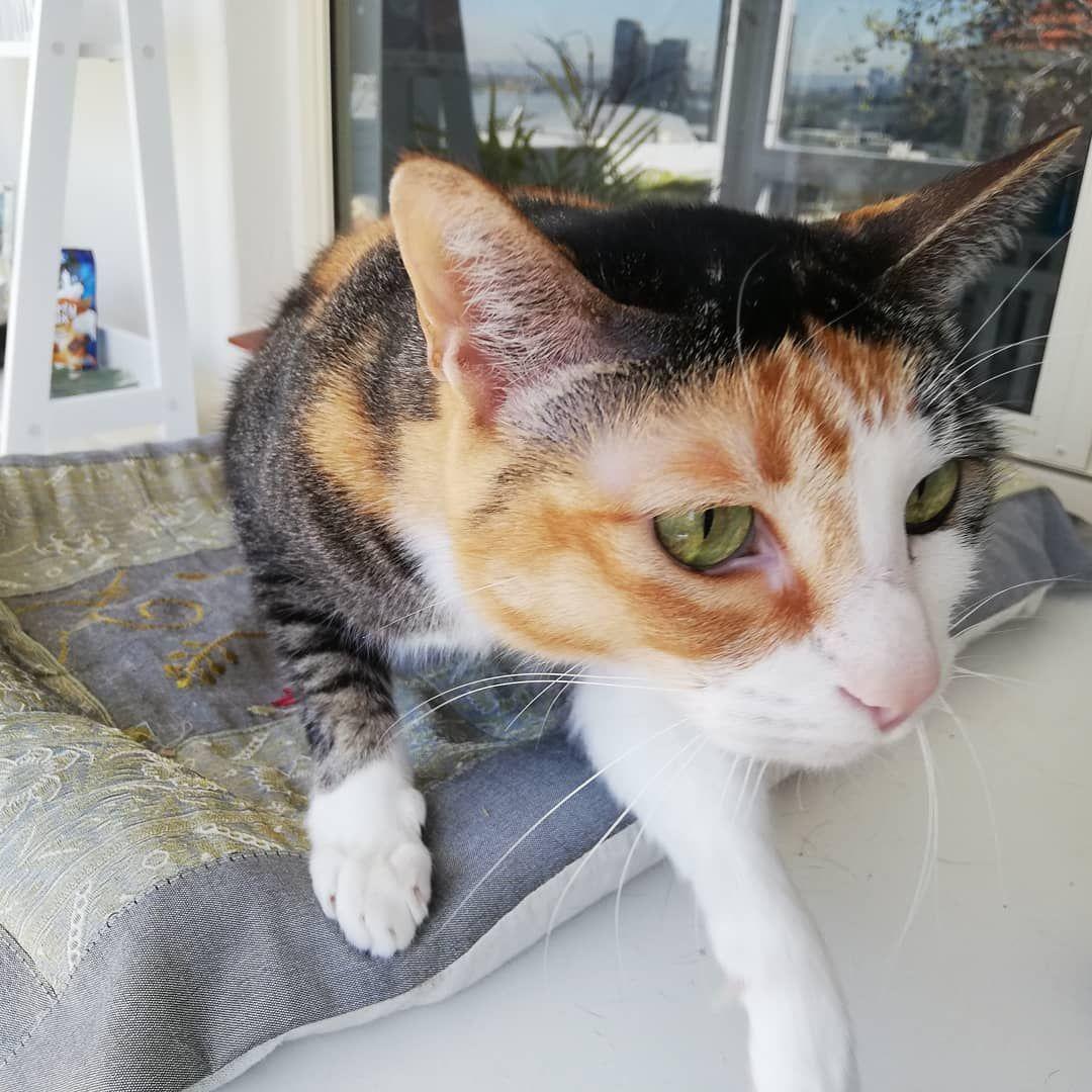 Catsofinstagram Kitten Cats Instacat Meows Mainecoonkitten Instacat Meow Catlovers Miau Cat Features Catoftheday Catlife Catlov Animals Cats