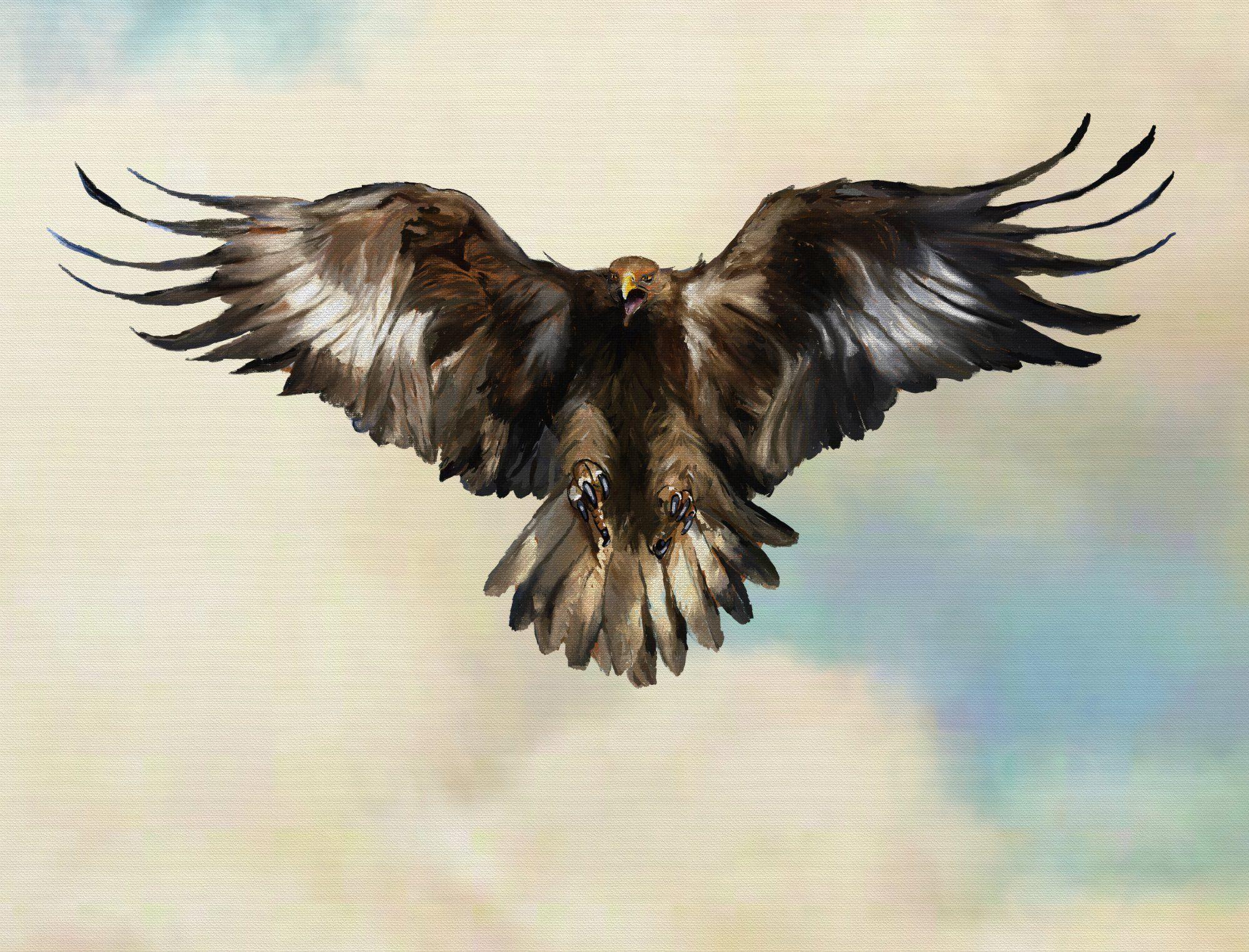bird wings spread - HD1998×1523