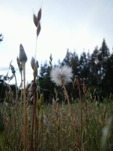 Atardecer | Flickr: Intercambio de fotos