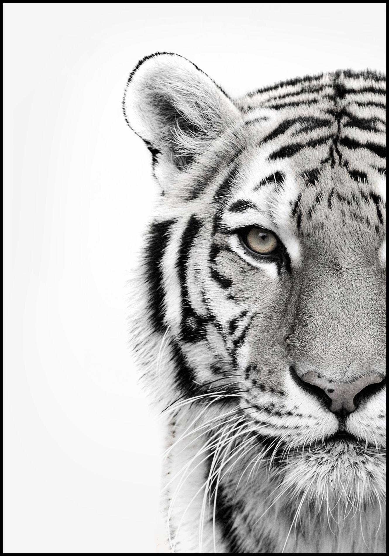 Saisissez Votre Appartement Tiger Aubaine Exuberant Souverain Et Fantaisiste Dessins De Tatouage En 2020 Affiche Noir Et Blanc Tatouage De Tigre Blanc Art Tigre