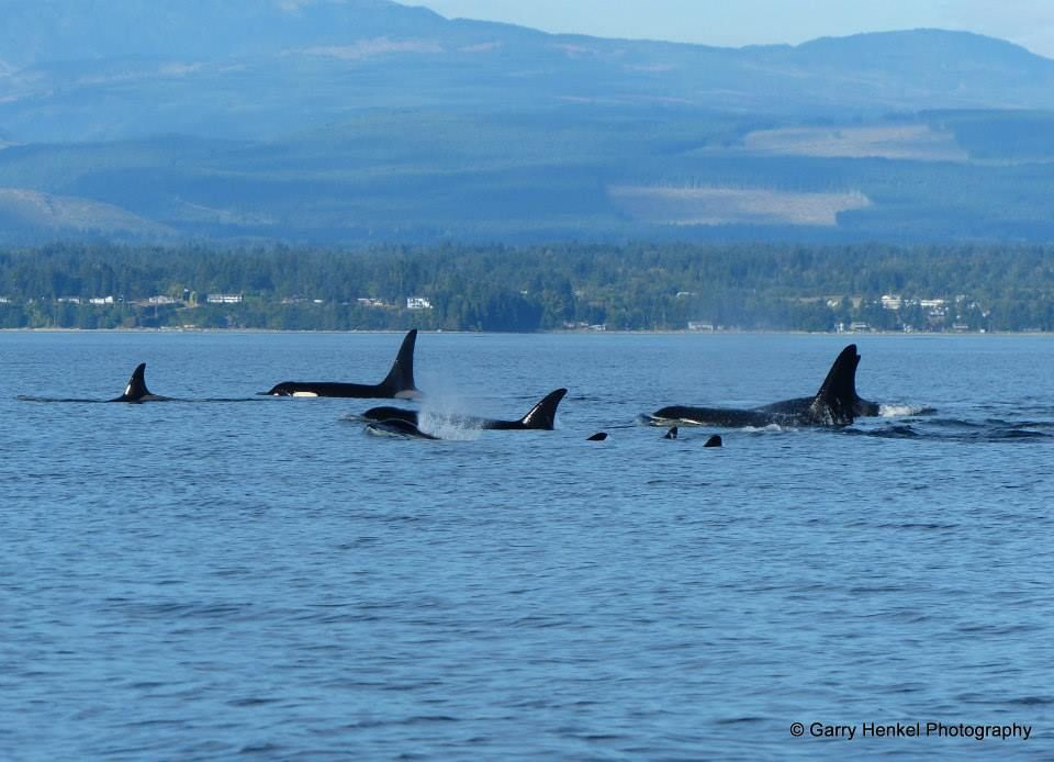 Bilderbuch. @Aboriginal Journeys - Whale Watching & Grizzly Bear Tours