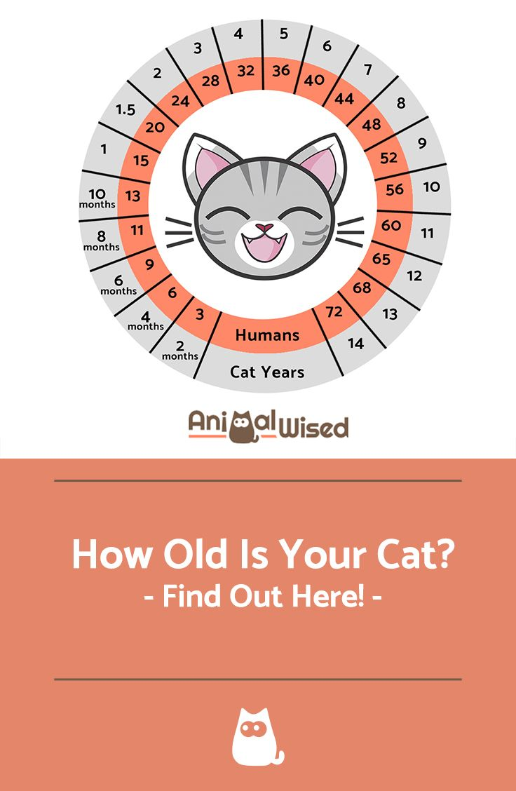How Long Kittens Need Kitten Food Ideas