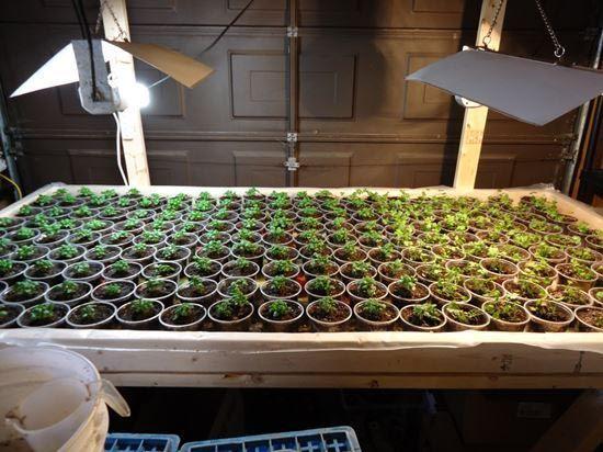 Indoor Vegetable Garden Lighting Indoor Vegetable 400 x 300