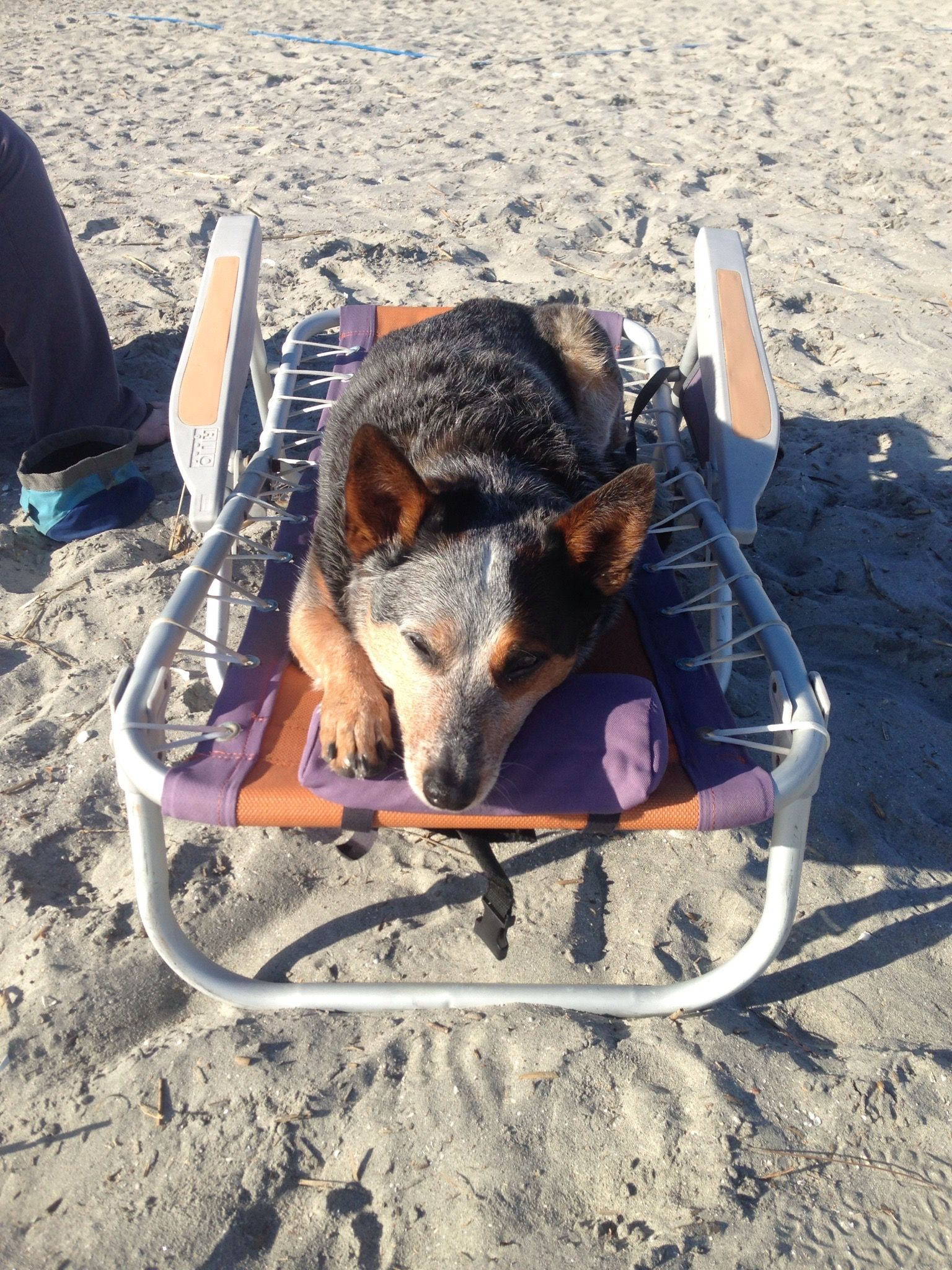 Blue heeler dogs image by Marie Hoffman on Must Love