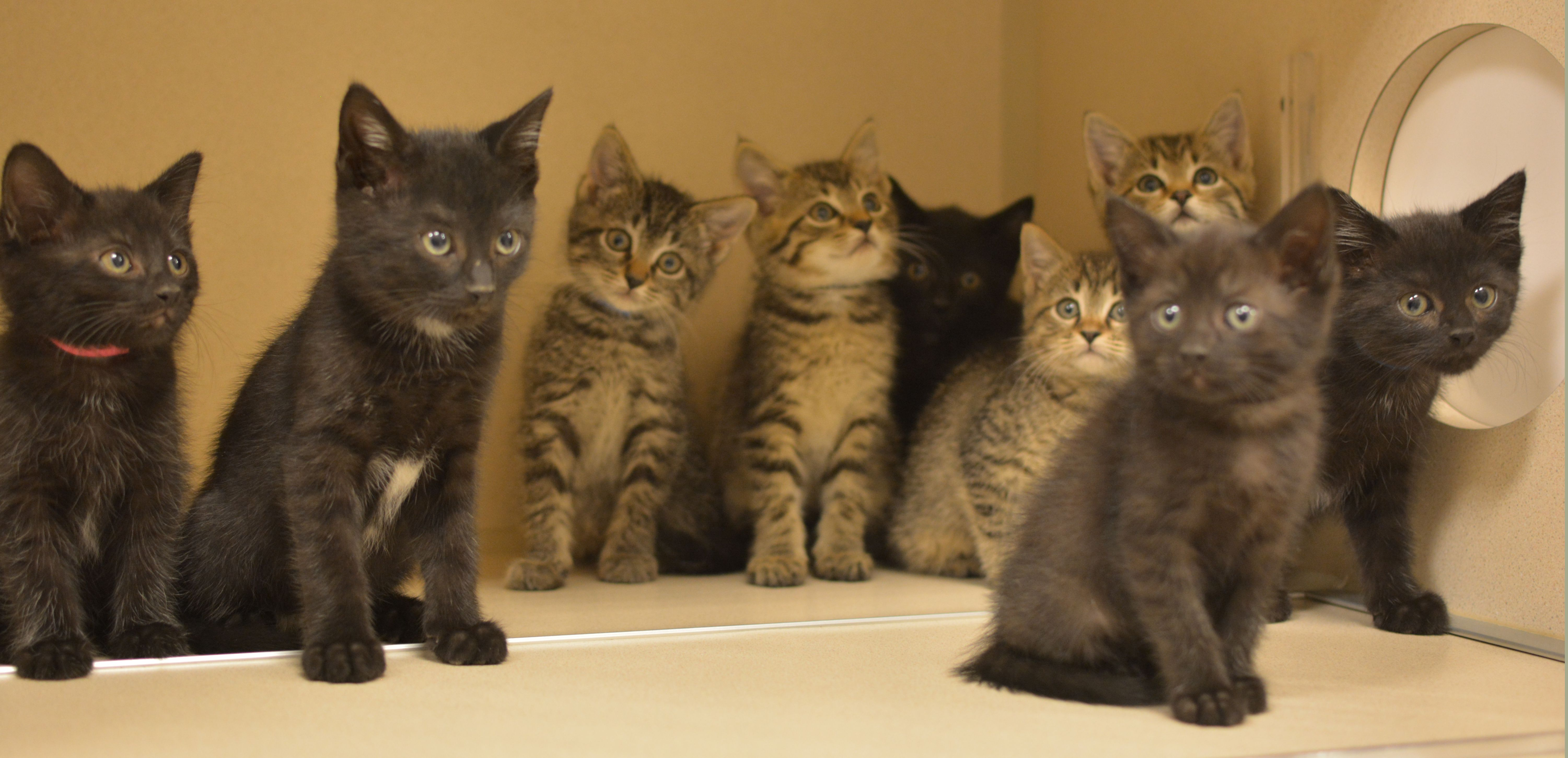What is cuter than 10 kittens from Tennessee? NOTHING