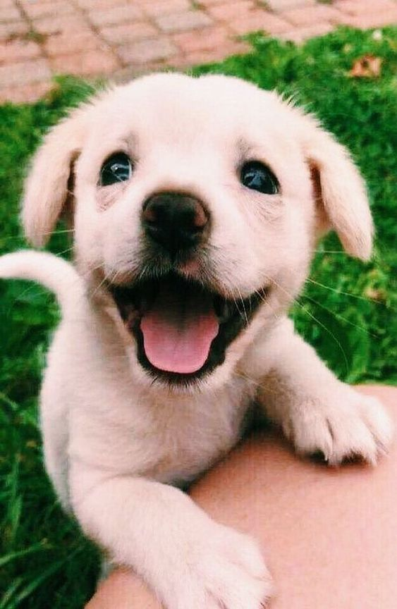 Top 5 Signs That Your Dog is Happy