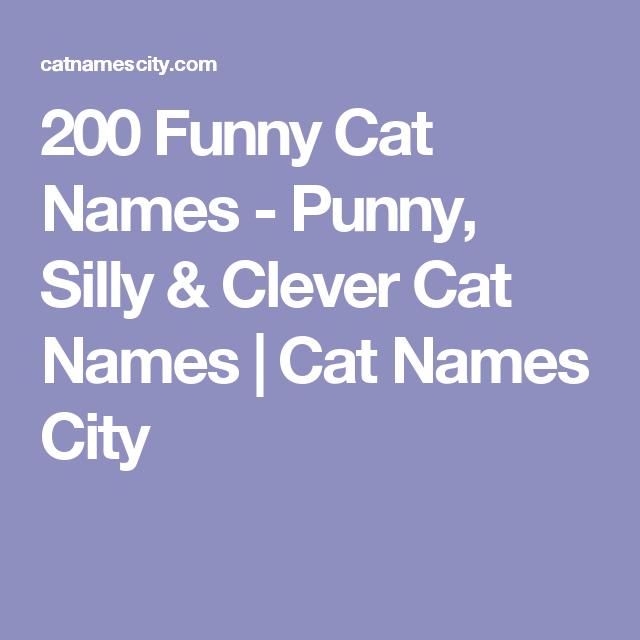Funny Cat Names | Cat Facts | Funny cat names, Funny female cat
