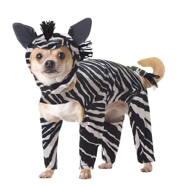 Zebra Costume For Dogs Dog Halloween Costumes Pet Costumes Dog