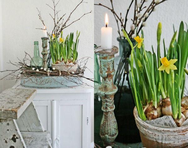 Ga de winter te lijf; haal de lente in huis met bloembollen Plant - küche dekoration shop