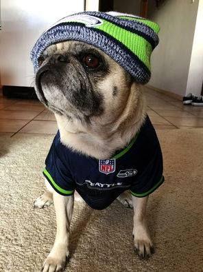 Go Seahawks Pug Love Pugs Pug Pictures