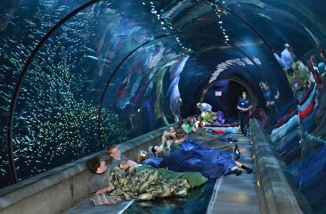 The Oregon Coast Aquarium World S Coolest Underwater Lodgings Fodors Overnight Guests At