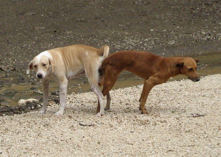 Pin En Perros Pegados