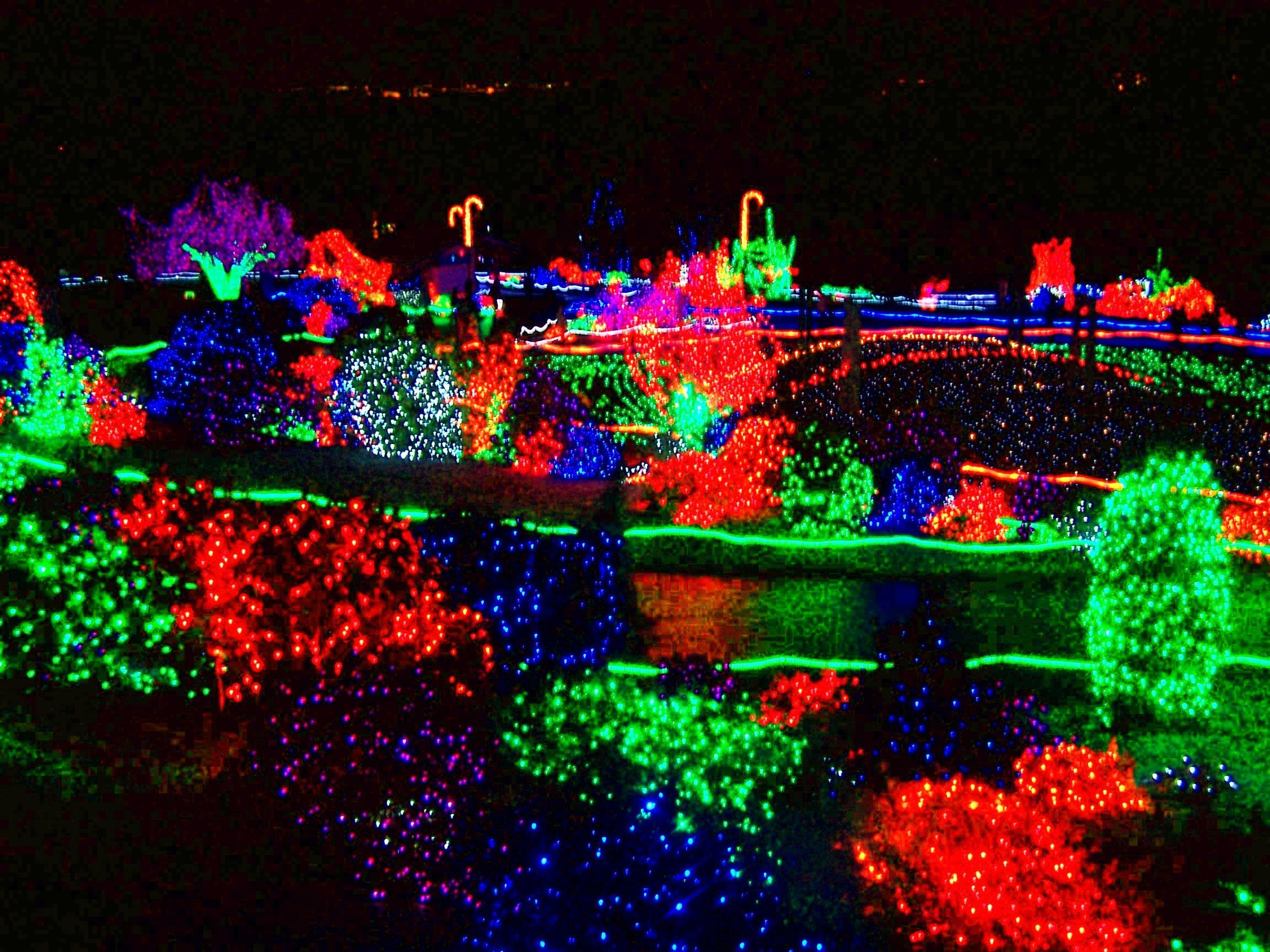 Tacoma Wa Pt Defiance Zoo Lights Celebration Zoo Lights Anniversary Trips Woodland Park Zoo
