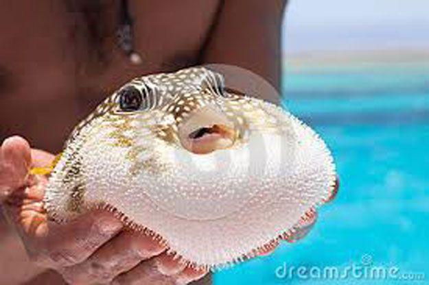 Elmwaten Com Water Animals Fish Pet Animals