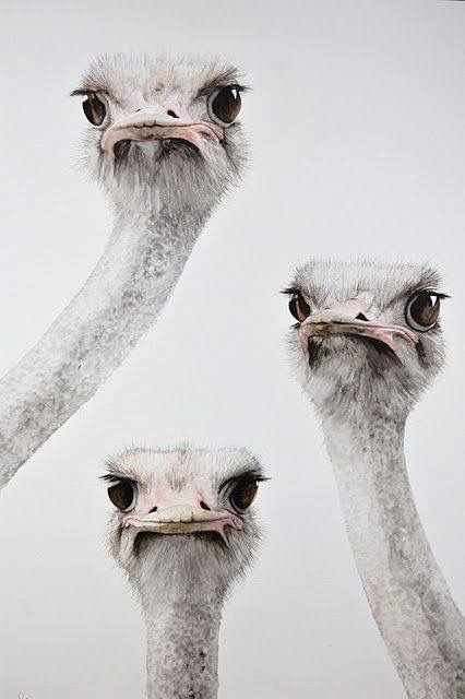 Ostriches by Impressive Earth