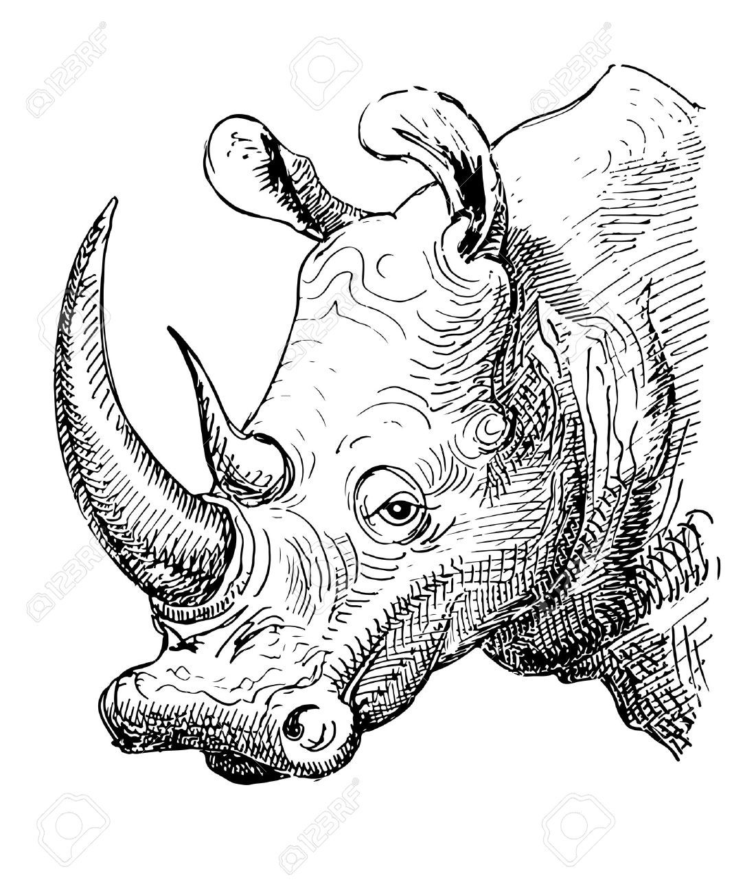 Vector Artwork Rhinoceros Sketch Black And White Drawing Of Realistic Head Animal Isolated On White Ba Animal Sketches Animal Drawings Cute Animal Drawings