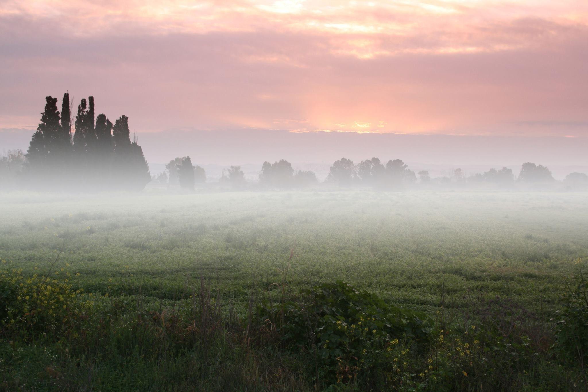 Фотоэффекты с туманом