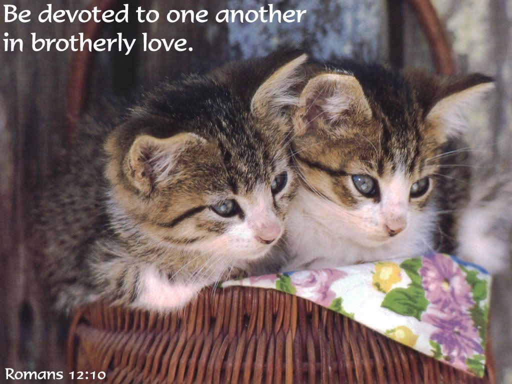Animals Widescreen Wallpaper Animal Jpg Photo This Photo Was Uploaded By Bible Quoted Pics Find Other Animals Wi Cute Animals Cats And Kittens Animal Quotes
