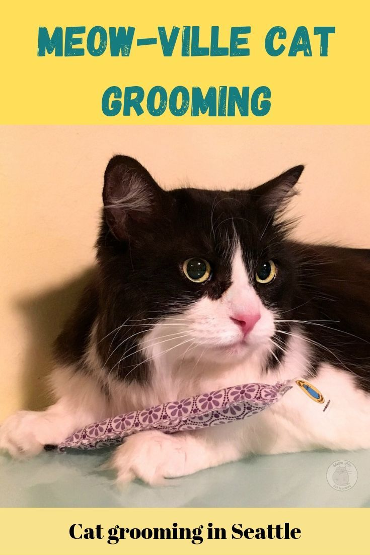 Like many of you, I thought that cats groomed themselves