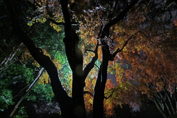 夜散歩のススメ - 埼玉県