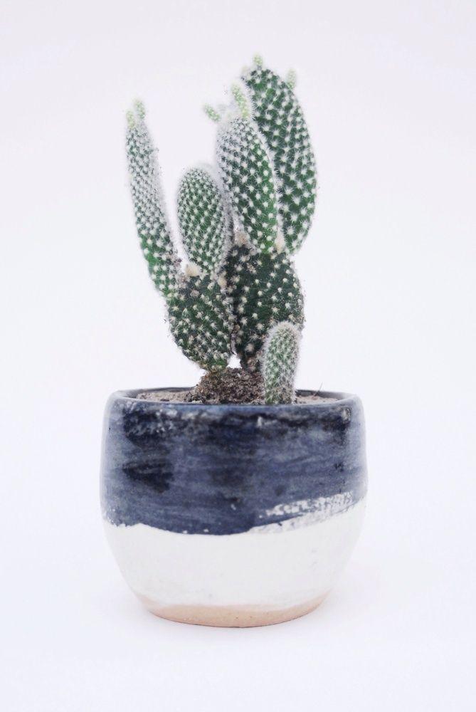 Cacti #home #interiors #decor · Indoor CactusCactus PlantersCactus ...