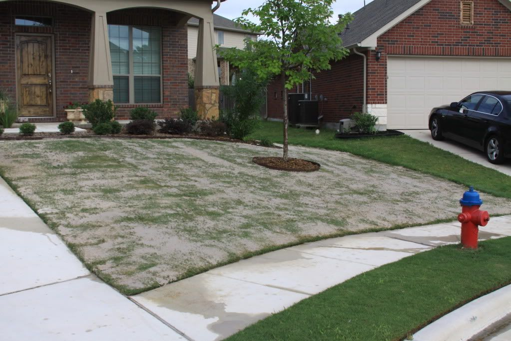 Lawn Leveling With Sand My Experience With Pictures Bermuda Grass Bermuda Grass Care Lawn Leveling