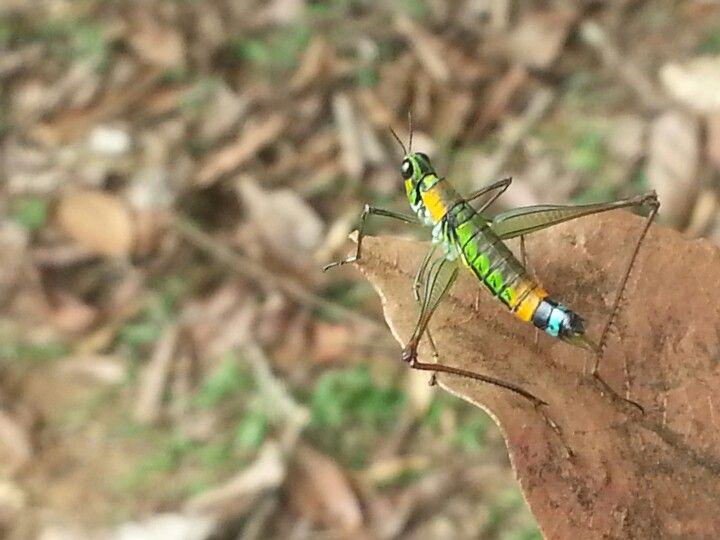 GRILLO en Dapa Colombia