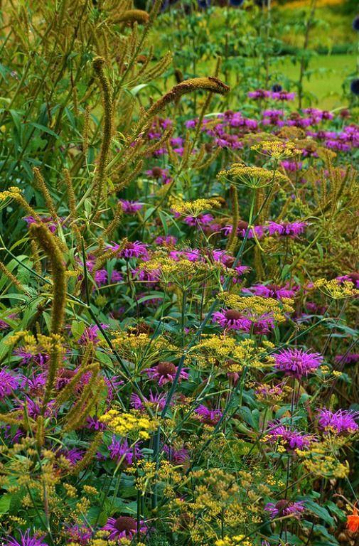 Monarda with fine textures. Ness Botanic Garden. photo: Karl Gercens.
