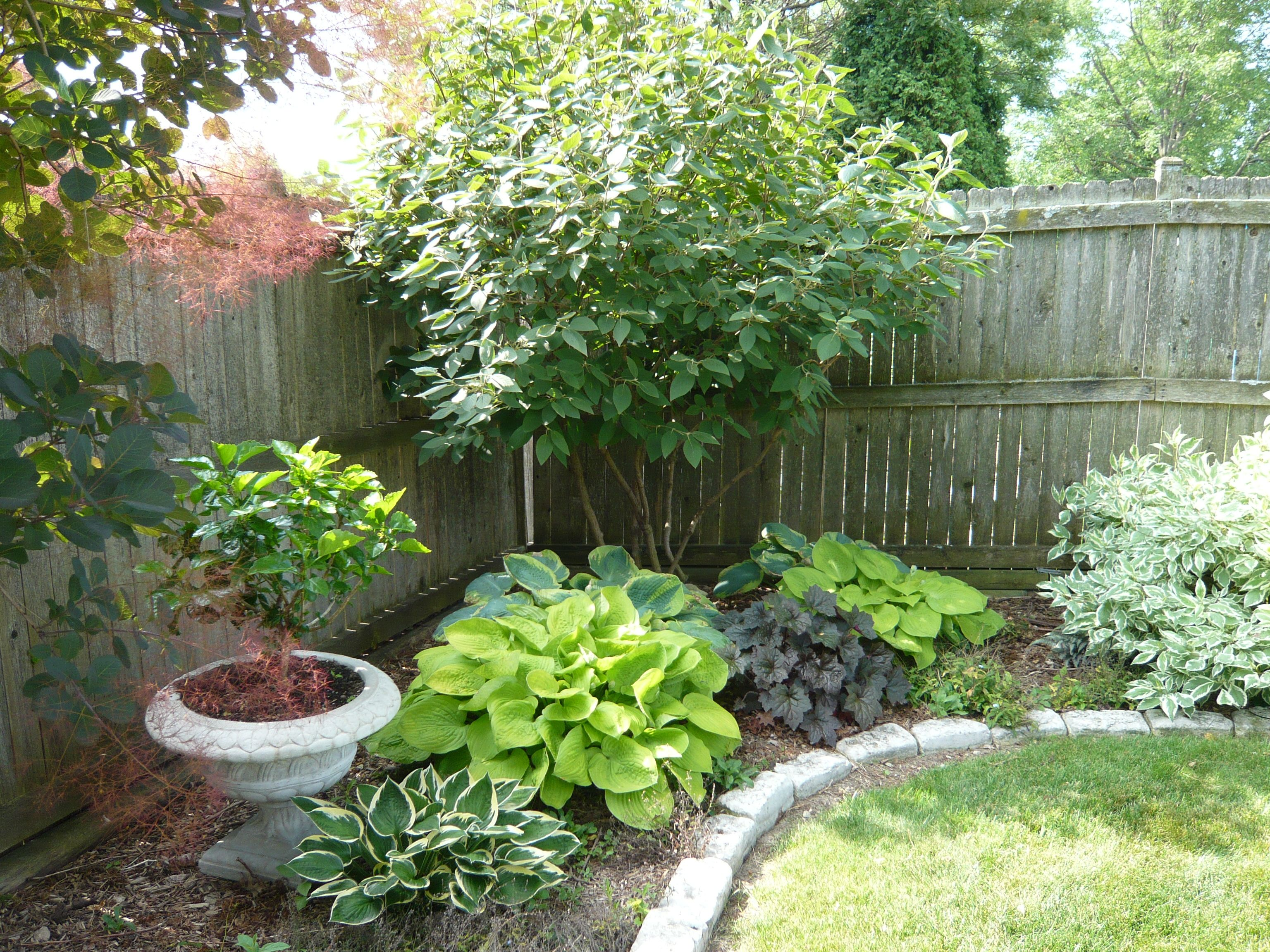 Easy to maintain shade plants love the combination of for Easy gardens to maintain