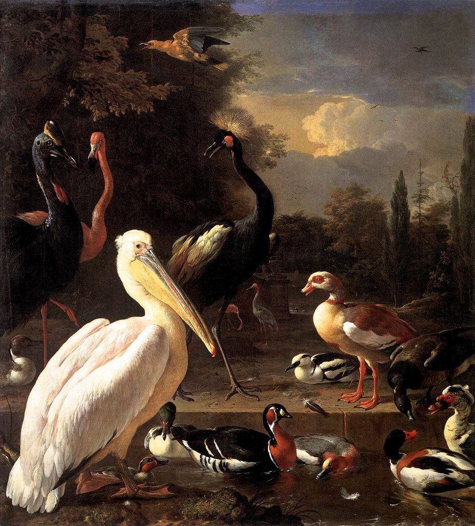 Melchior d'Hondecoeter - The Floating Feather | Flickr - Photo Sharing!