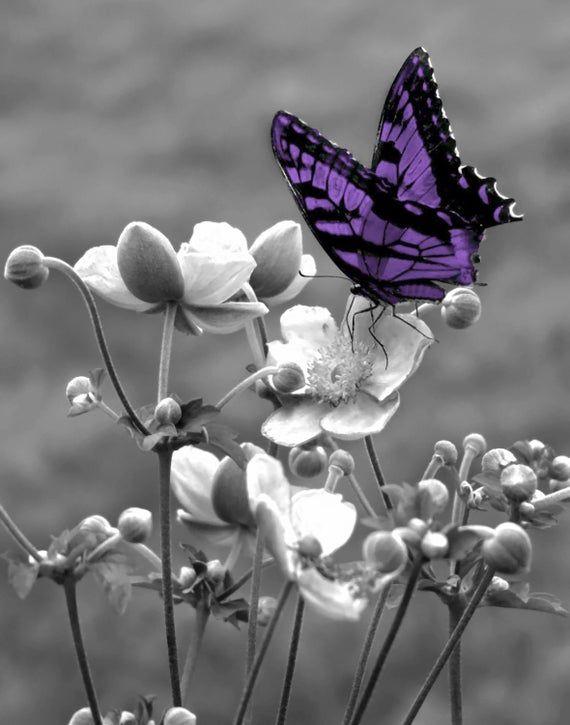 Black White Purple Decor Purple Butterfly Purple Modern | Etsy