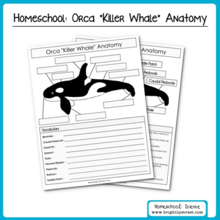 Having A Whale Of A Time Homeschooling