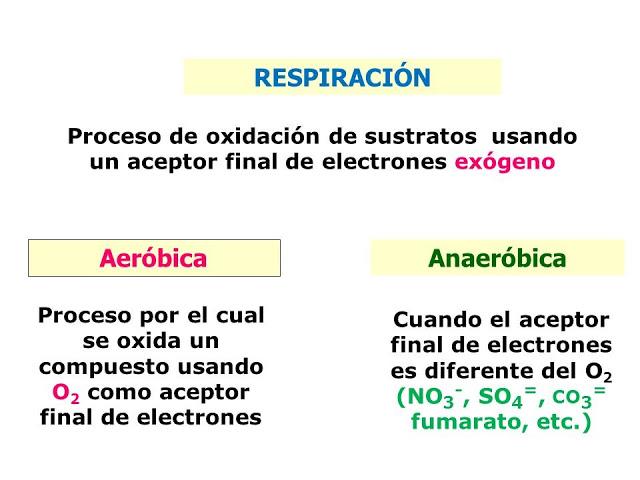 Aceptor Final De Electrones En La Respiracion Aerobia Microbiology