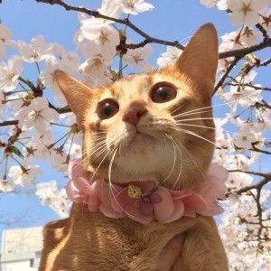 Animaks Orangecat Cats Cute Cats Pretty Cats