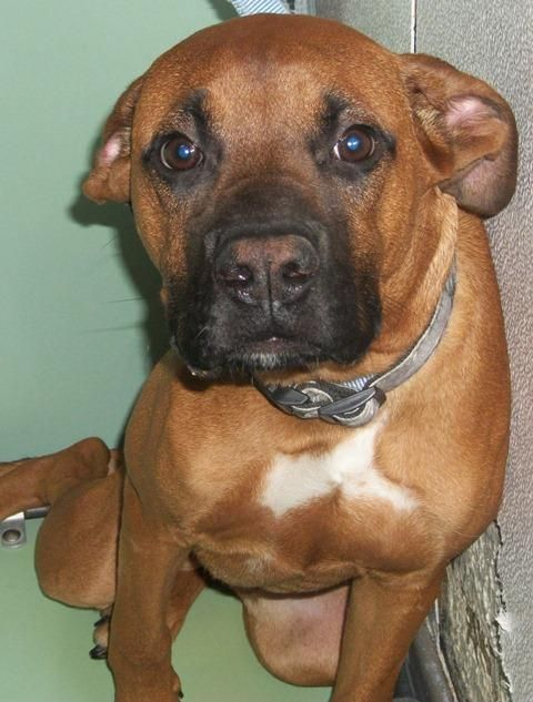 DAVID...VA...I am available for adoption on 03/08/14.  Space is limited. Come in to meet me, or call to get more information at (540) 507-7459.Please spay or neuter and microchip your pet today.PLEASE ADOPT A HOMELESS PETAll adoptions are based on a first-come...