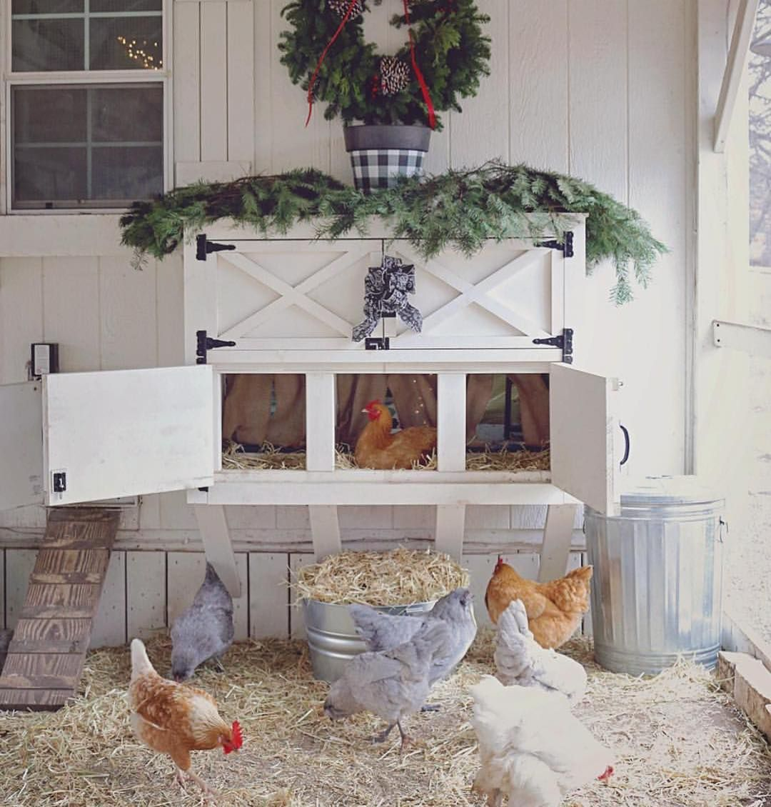 Image May Contain Table Plant And Indoor Fancy Chicken Coop Chicken Coop Decor Cute Chicken Coops